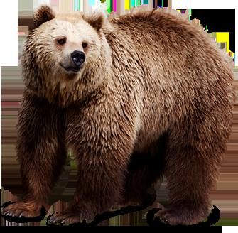 bear_PNG1191.png