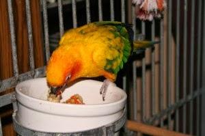 parrot-eating-1-300x199.jpg