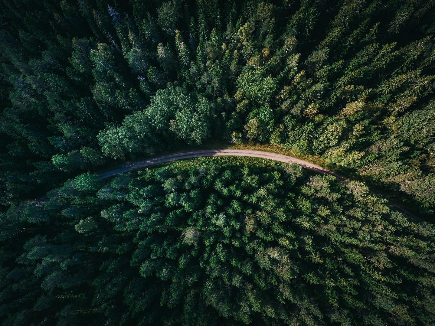 Ecosia is een zoekmachine die bomen plant