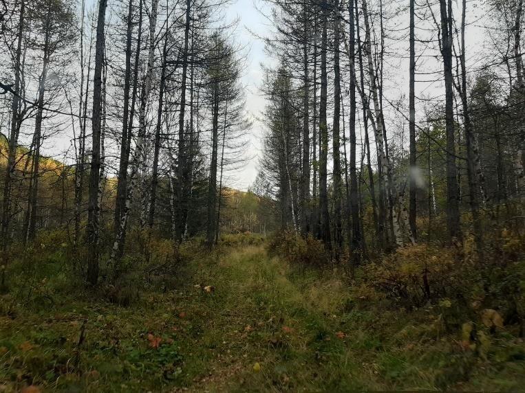 Отчет об автомобильном походе по Западной Сибири
