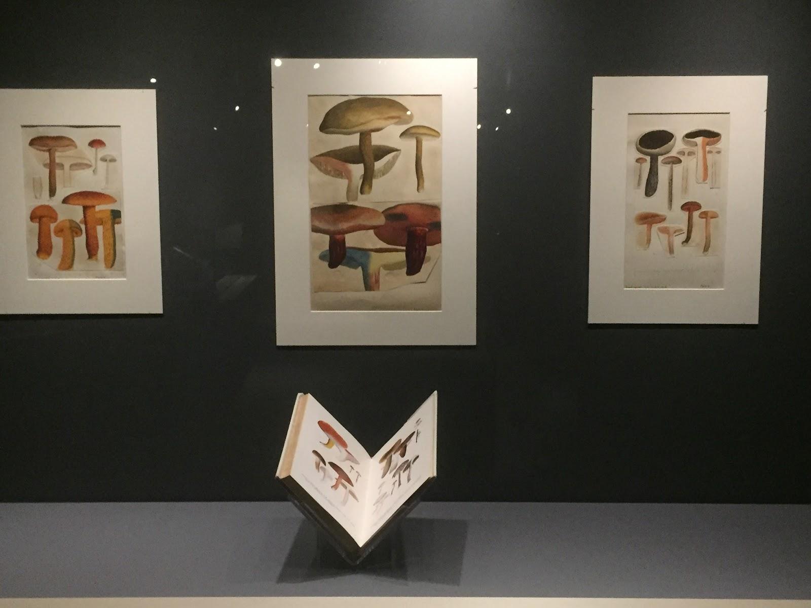 Colourful fungi illustrations