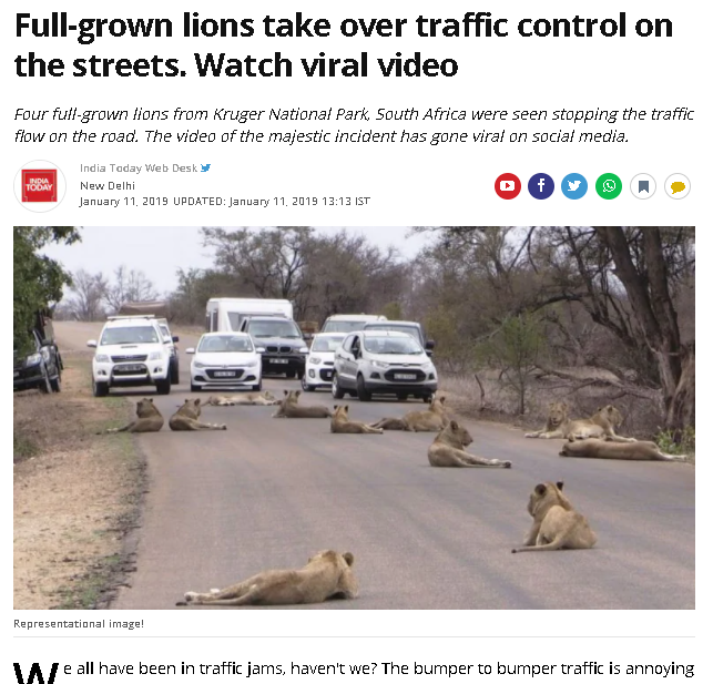 Lion gujarat India Today.png