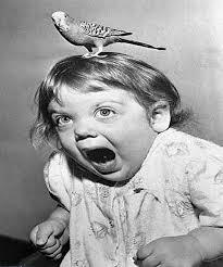 What is Ornithophobia? (An Overview)