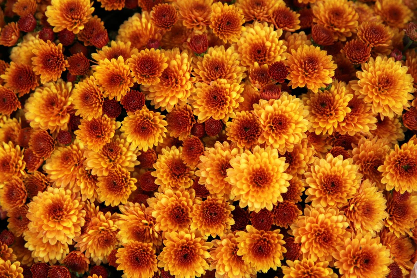Free Images : nature, blossom, flower, petal, bloom, floral ...