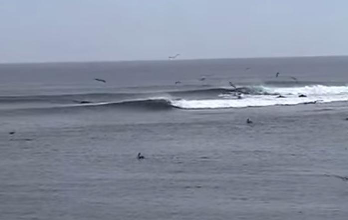 magdalena-bay-bajasur-surfing-3.jpg