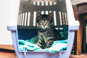 Best crate training tips to help your pet feel comfortable