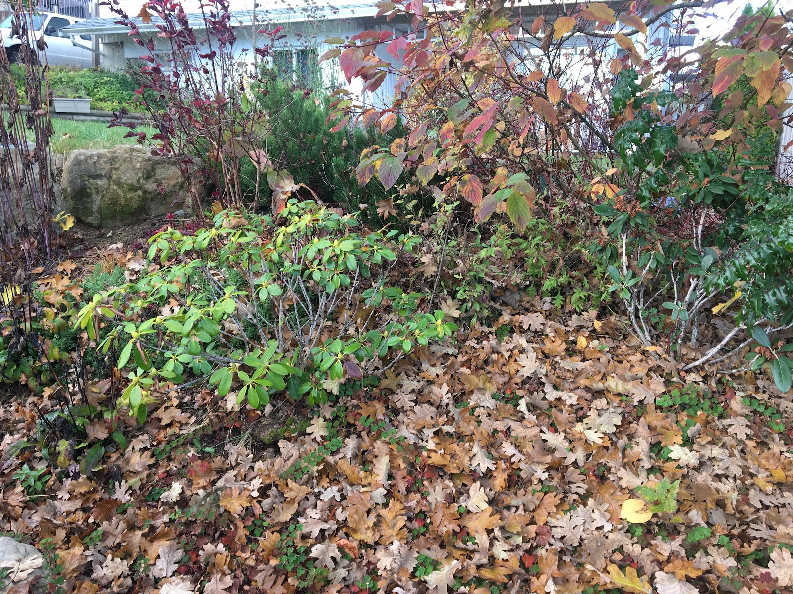 Leaves left in the garden bed as a natural mulch