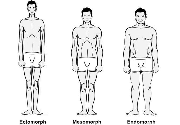 The body types of soccer players - ectomorph, mesomorph and endomorph