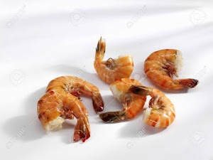 Can cats eat shrimp tails