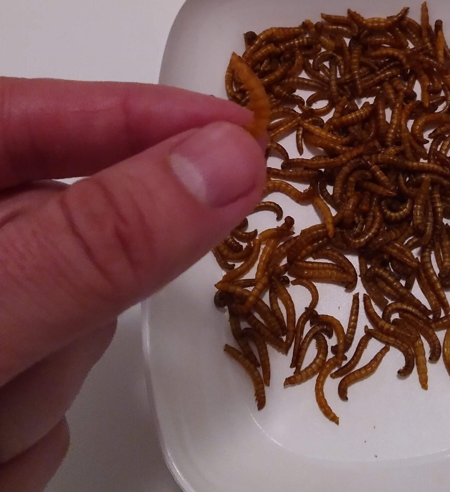 Recenze WormUP: sušení červi