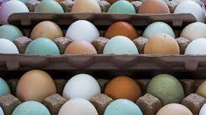 White, Brown, Green Chicken Eggs: What's the Difference ...