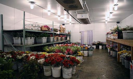 Giới thiệu đơn vị chuyên nhận lắp đặt kho lạnh bảo quản hoa tươi.