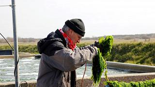 Growing vegetables in seawater could be the answer to feeding billions