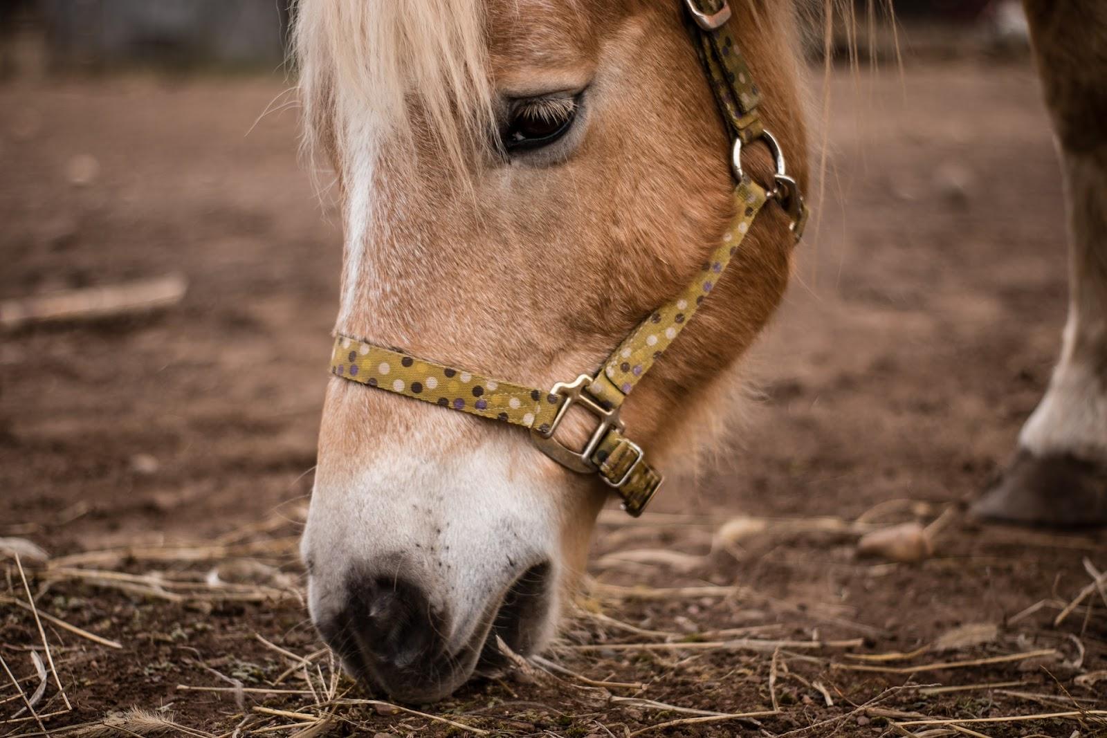 Mormo voltou a afetar rebanhos de equinos, em Tocantins (Fonte: Unsplash)
