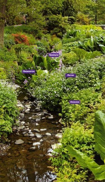 растения для воды, цветник у воды, растения для влажной почвы