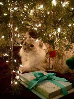 How Christmas Feels when you have a Cat