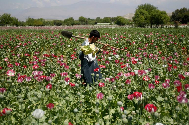Opium: Afghanistan's drug trade that helped fuel the Taliban   Business and  Economy News   Al Jazeera