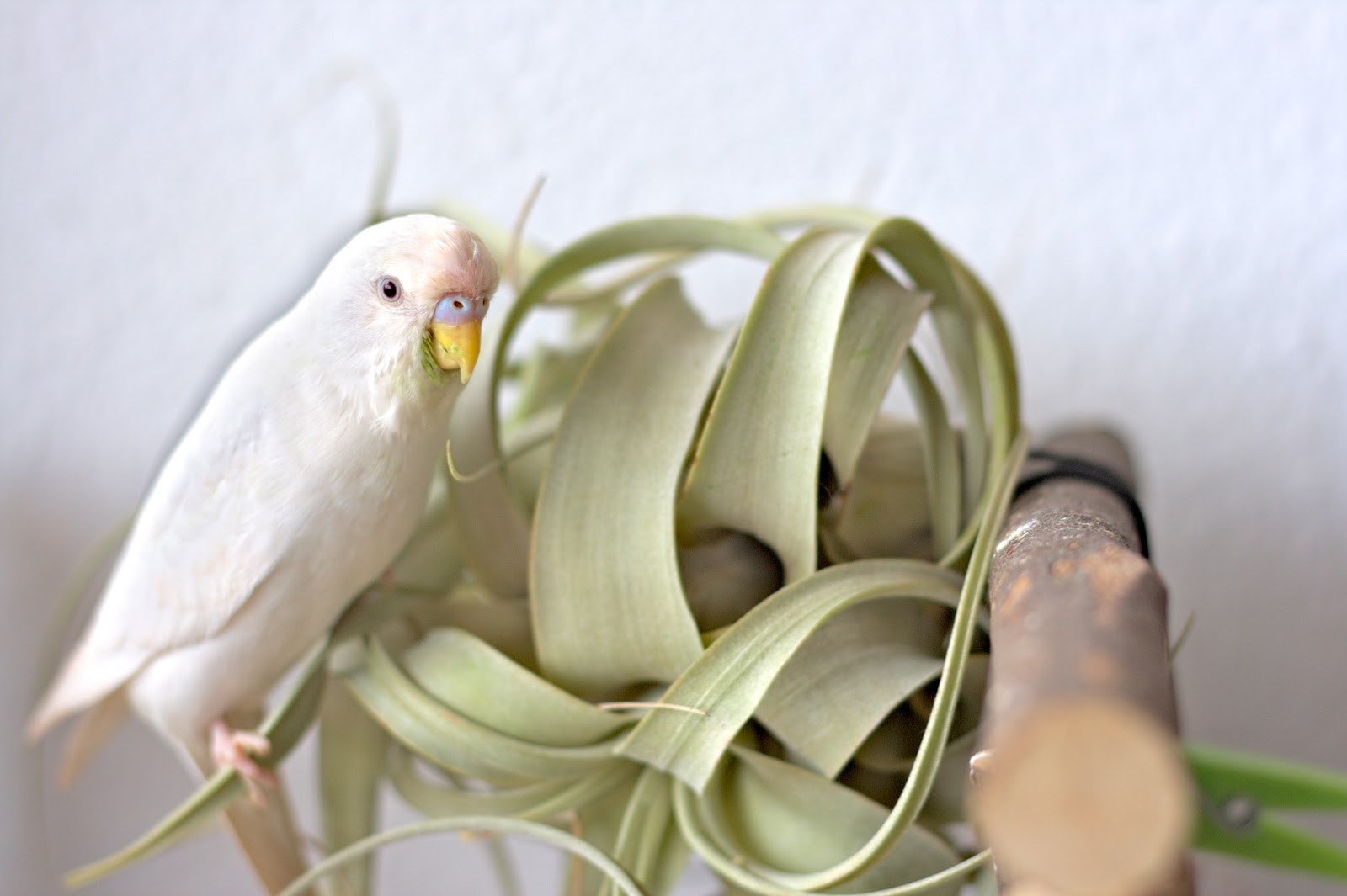 Bird and air plant