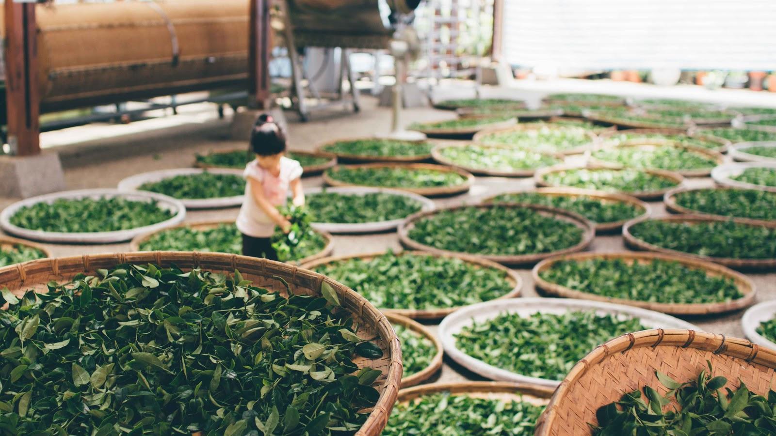 茶葉種類介紹 茶葉禮盒推薦