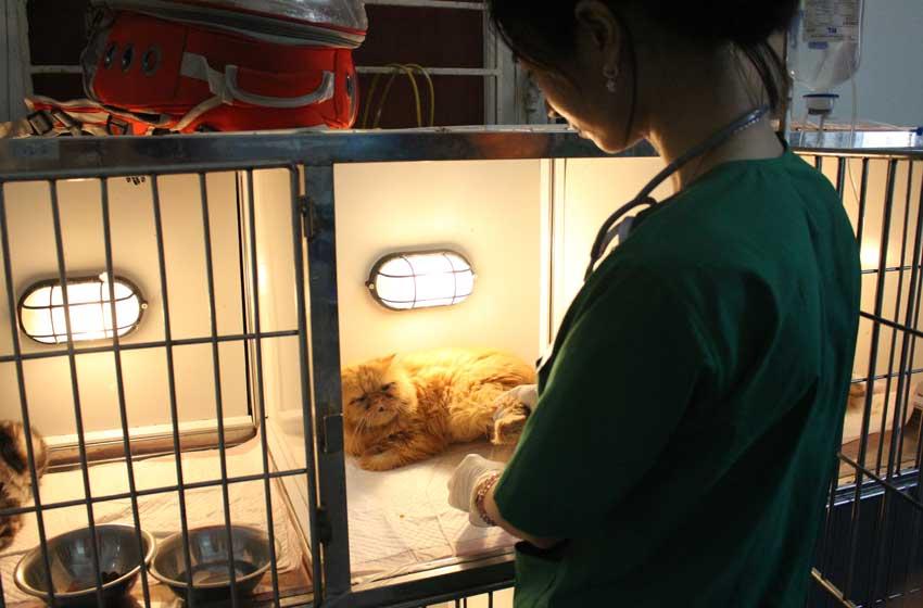 Săn tìm bác sỹ thú y hà Nội giỏi cho thú cưng có thực sự khó? - Ảnh 2