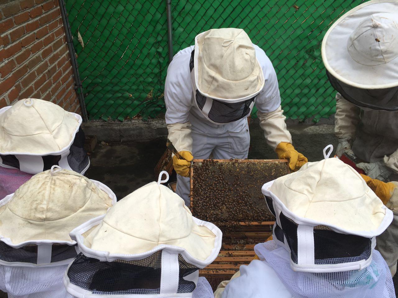 abejas frodo 3.jpeg