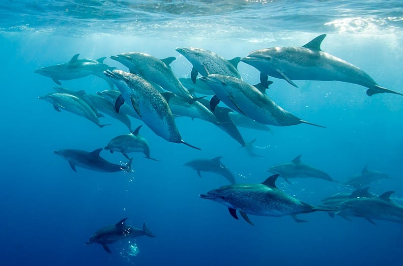 Dolphins surround swimmer; then he looks down and understands why |  KiwiReport