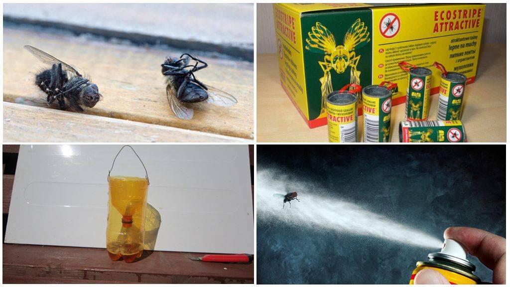 Как избавиться от мух современными средствами