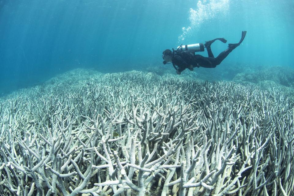 The Great Barrier Reef: A Long History, A Short Future
