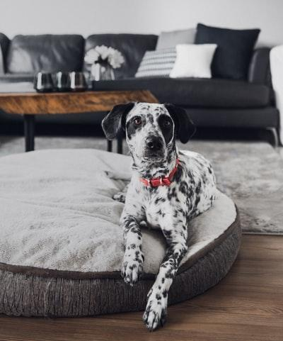 dog bed size - modern luxury dog bed
