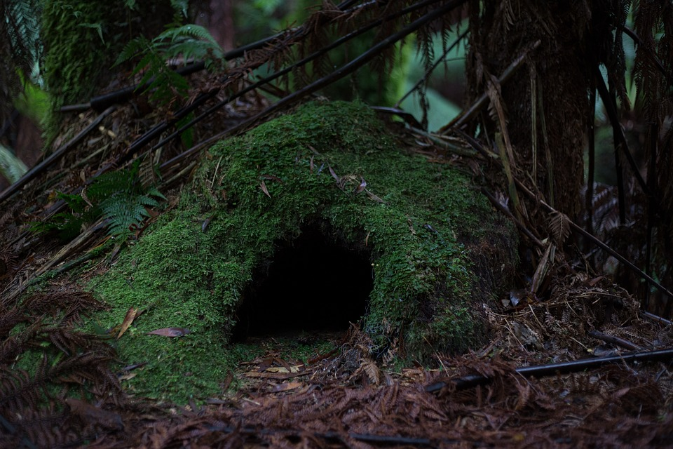 Cave, Forest, Moss, Nature, ...