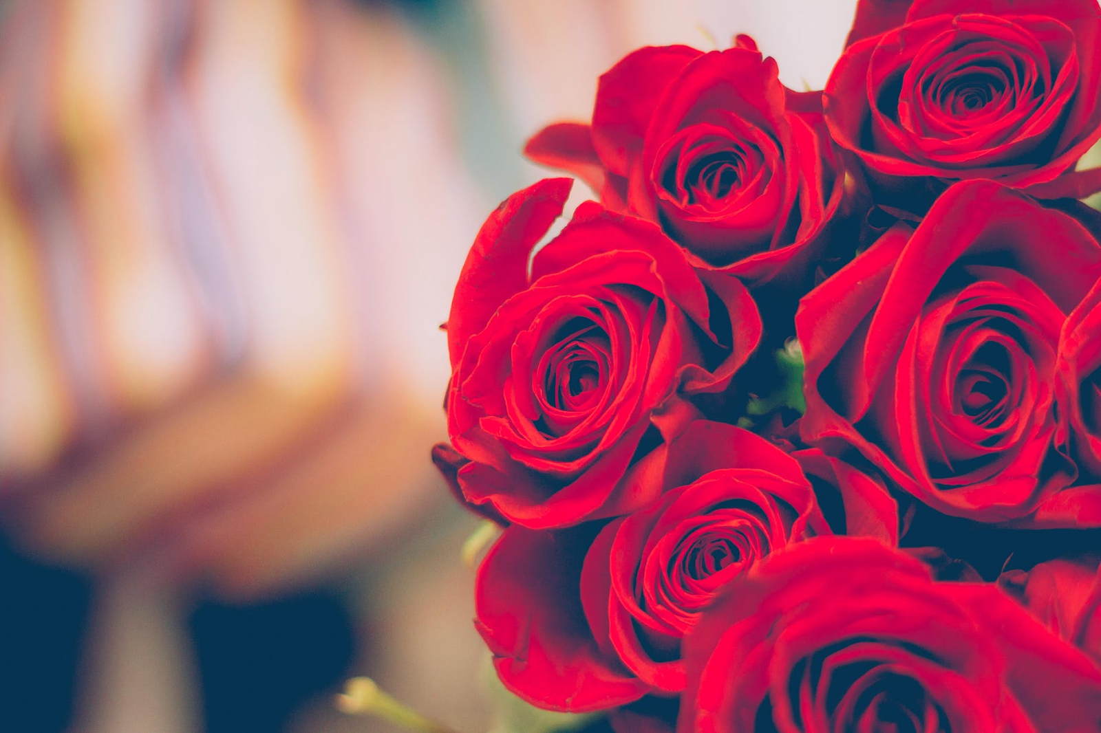 Guide to gifting roses by colour and meaning fresh flowers nothing says i love you like a beautiful bouquet of red roses we all know from movies and popular novels that red roses are a timeless symbol of love izmirmasajfo