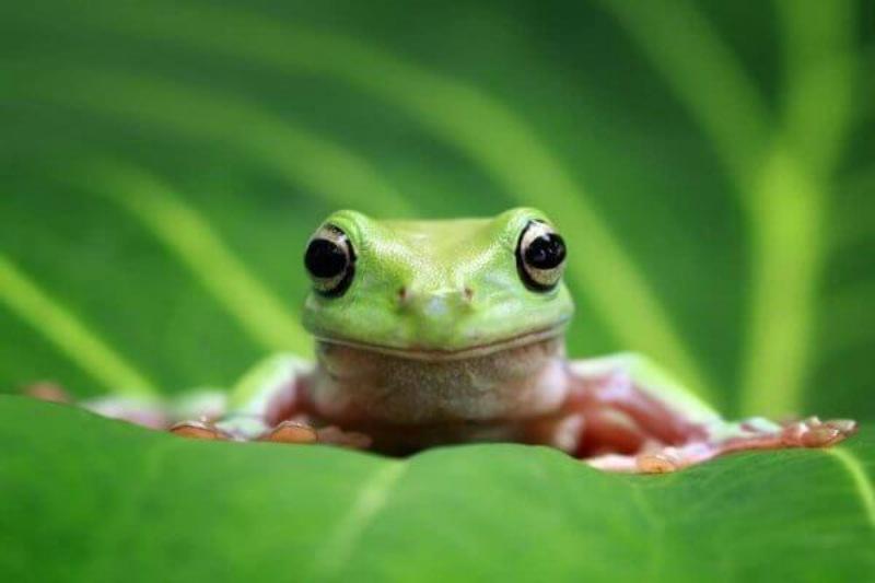 888b Giải mã giấc mơ thấy con ếch