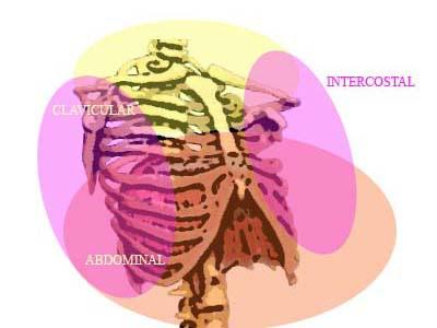 Resultado de imagen de respiracion abdominal