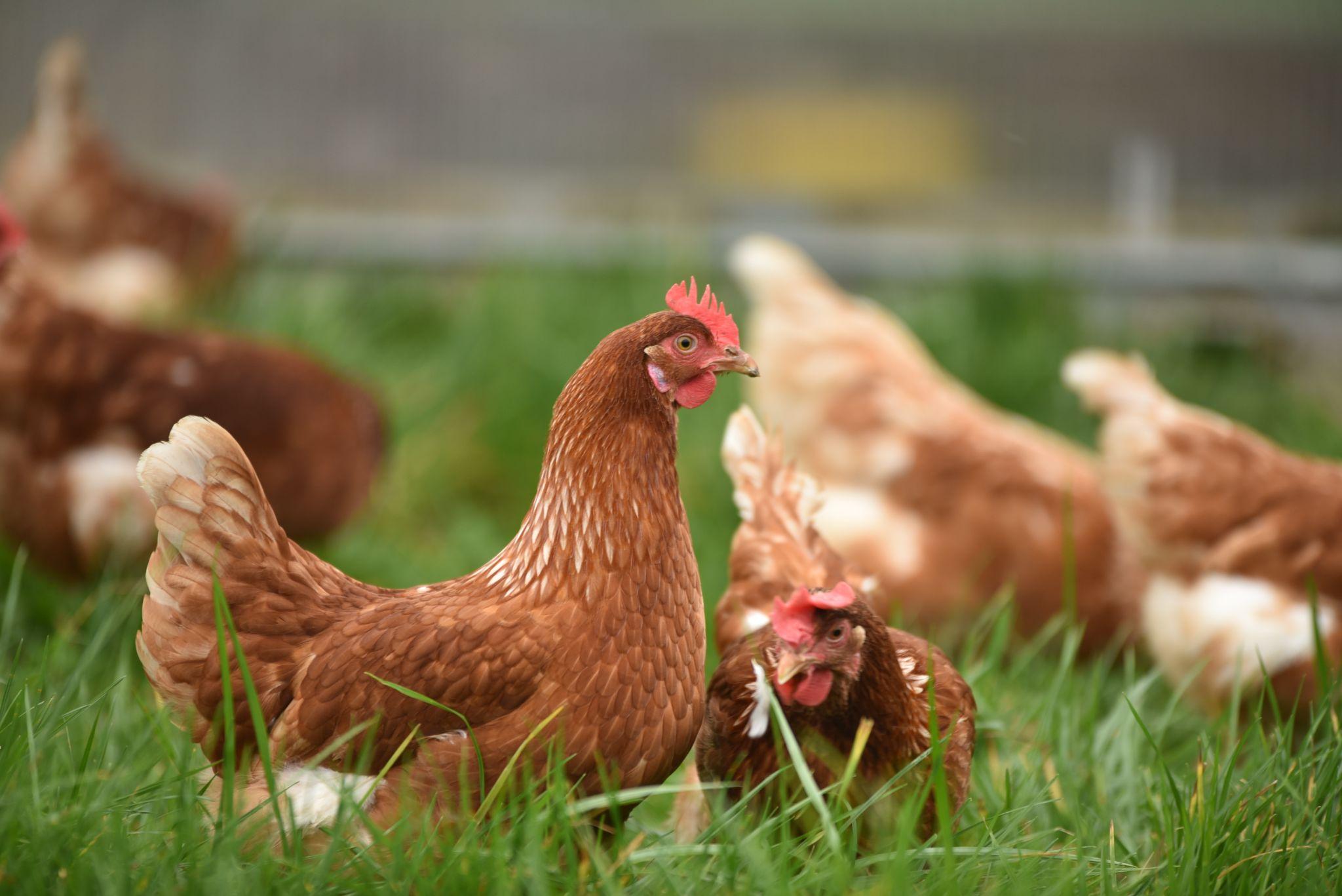 魚粉は高価!?飼料の魚粉の栄養と高騰している理由を解説!