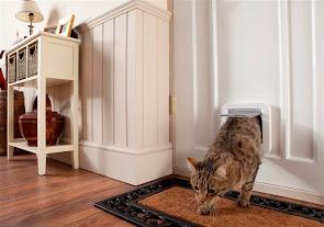 חתול  בית יוצא מהדלת לחתול