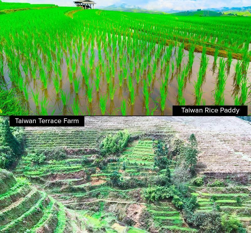 Farming in Taiwan