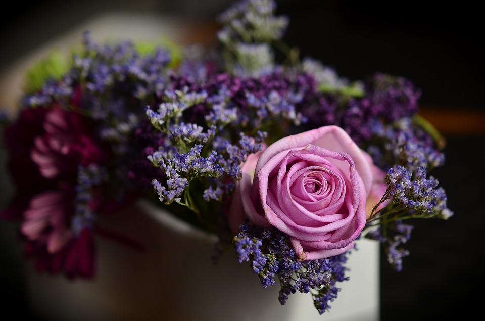 rose-1405552_960_720.jpg