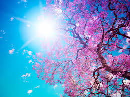 Image result for beautiful tree