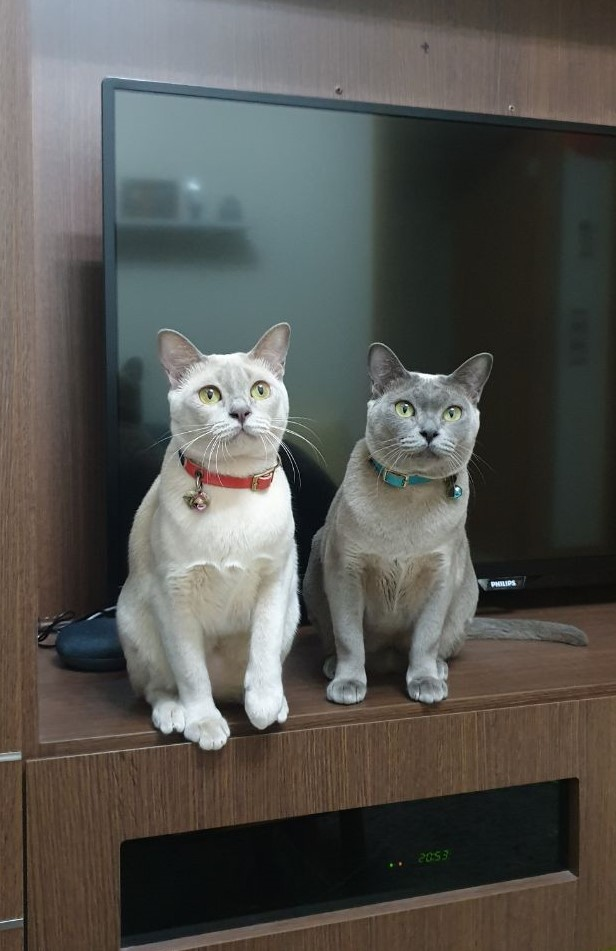 Beautiful Muffin (Left) and Smart Cookie (Right). Women In Marketing