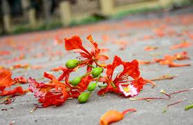 Image result for thời hoa đỏ