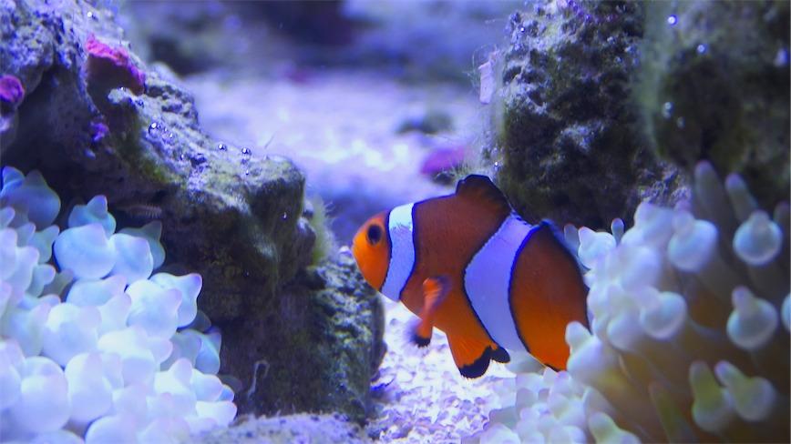 Nemo 5 E.jpg