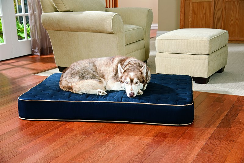 How to Know If Your Dog Likes His Bed?