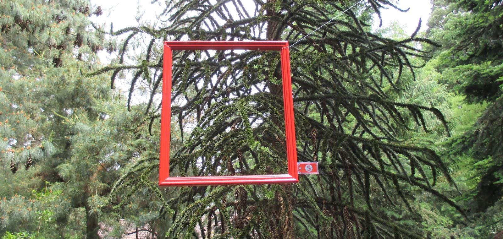 Een plaatje van een conifeer - Zinexprez