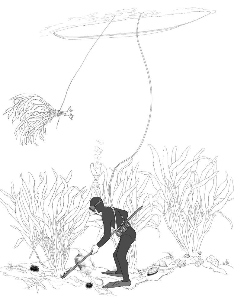 Dibujo del barreteo. Ilustración de revista REMA.