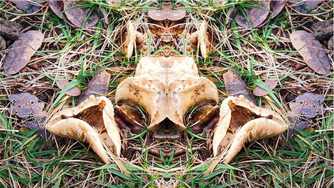 Mushroom Crab.jpg