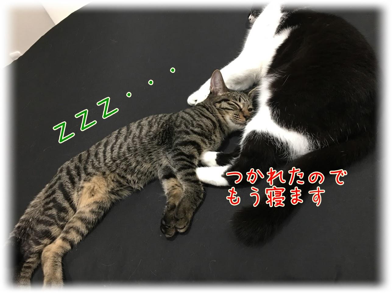 毎日開催される?猫が夜中にする運動会について。どうして夜暴れるの?対処方法は?