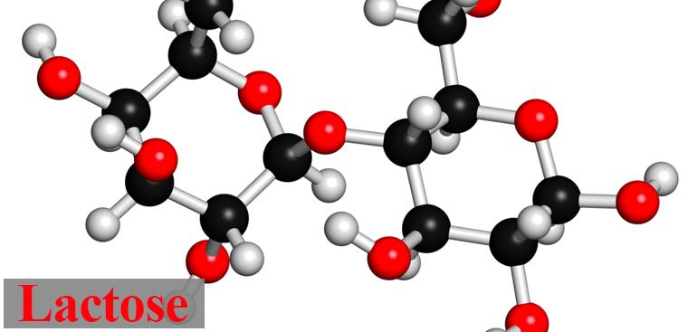 Cấu trúc phân tử của Lactose