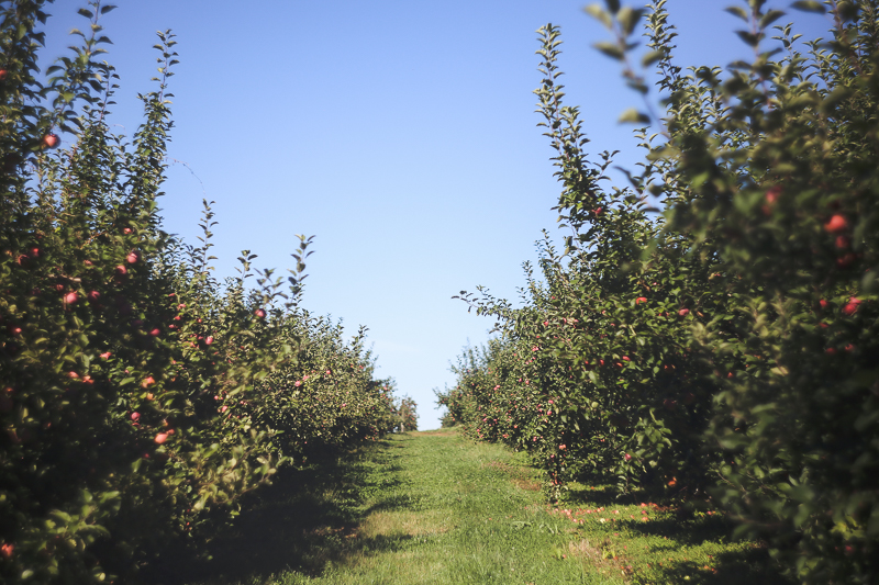 Fall Day Trip: Winery, Apple Orchards & a Pumpkin Patch