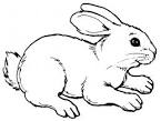 Image result for rabbit images drawings