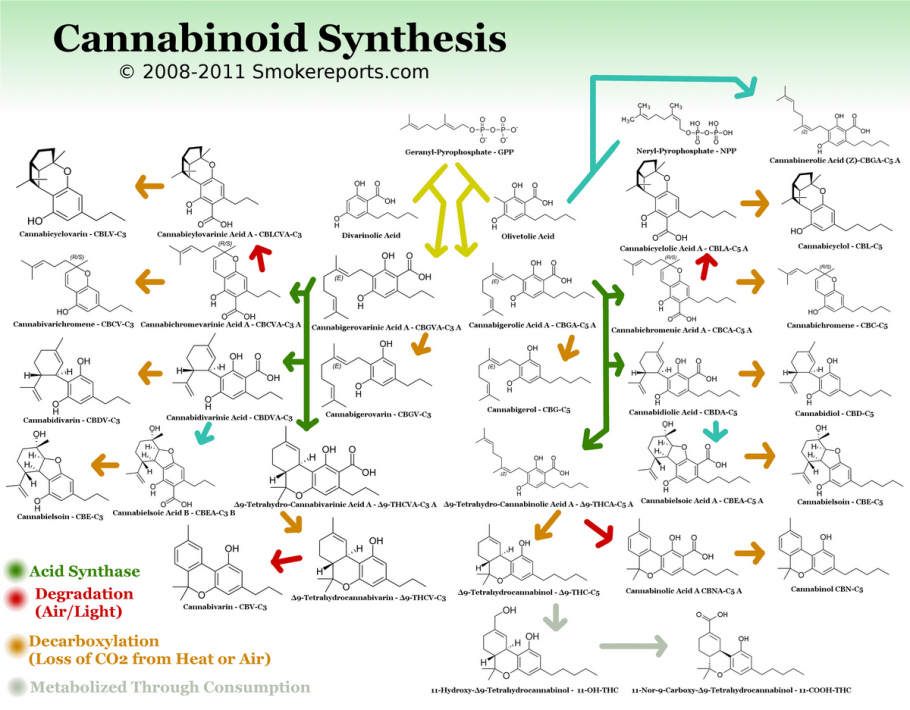 cannabinoid synthesis